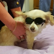 Heal Your Pet with Laser Therapy!